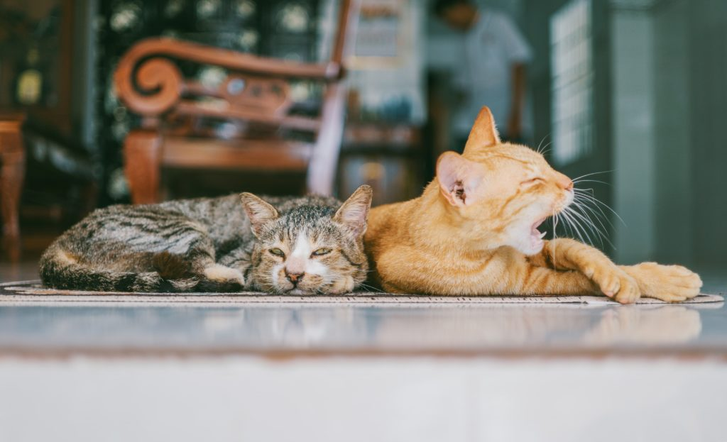 Two cats lying on the floor