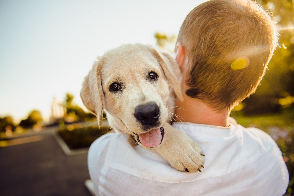 colostrum for dogs
